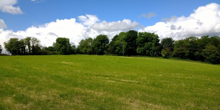 Killykeeragh field opposite Boyds 4 (002)