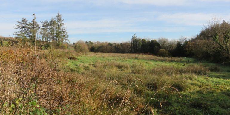 field across the road